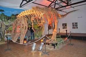 Paleontología. Archivo