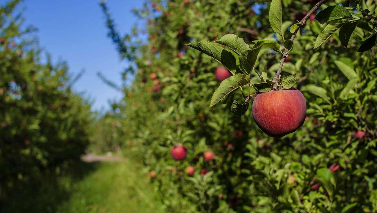 Resultado de imagen para productores frutícolas