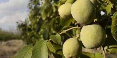 Se extiende la inscripción para el Curso en Cultivos Orgánicos Frutícolas
