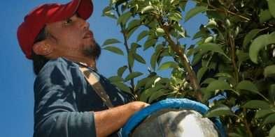 Neuquén y Río Negro presentarán a Nación una propuesta conjunta para la fruticultura