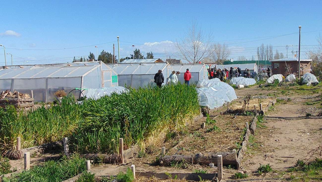 El programa de desarrollo agroalimentario avanza en el for Viveros en neuquen